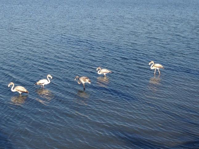 flamingo's zoutmijnen salinas mar menor