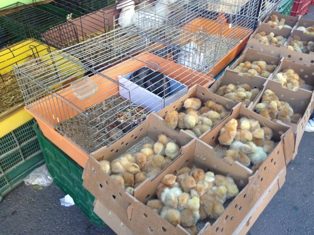 markt in tarragona
