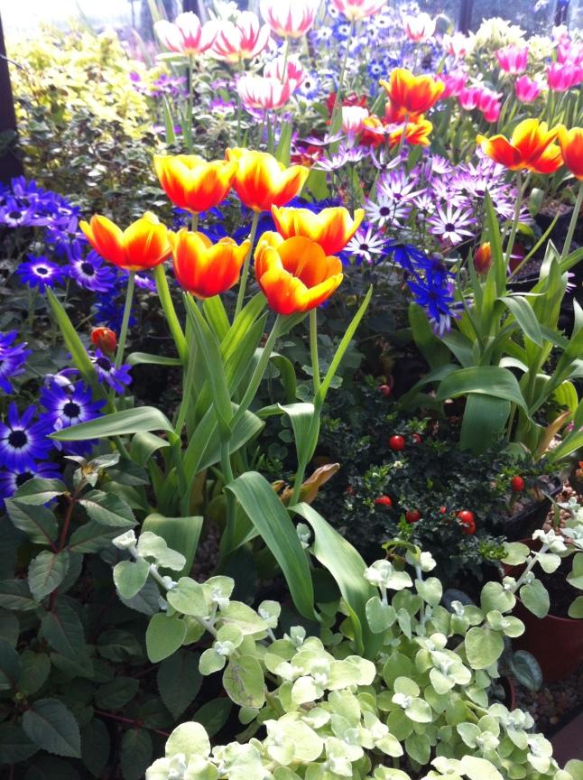 Mooie bloemen en nog veel meer in de Main Range glasshouses, incl. cactussen uit Death Valley en tulpen uit Holland.