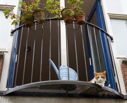 utrecht-kat