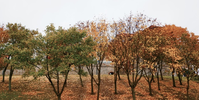 herfst-bratislava