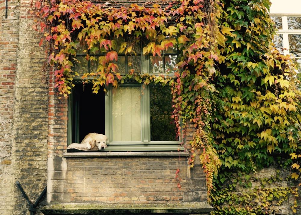 3CMGM-Bruges