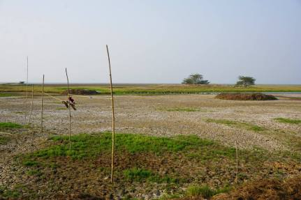 India-ChilikaLake-RuralVisit-3CMGM