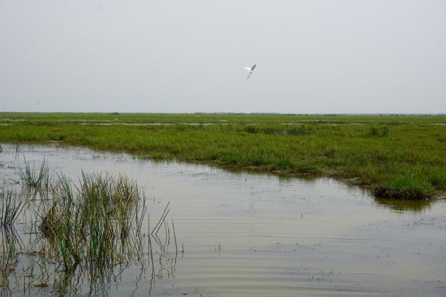 3CMGM-India-Wetlands