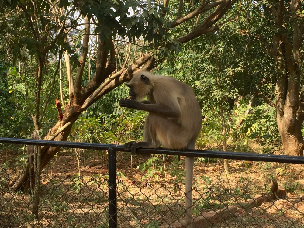 3CMGM-Monkey-Zoo