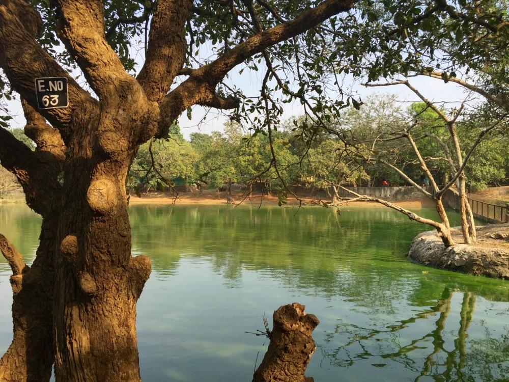 3CMGM-Zoo-Nandan-Kanan