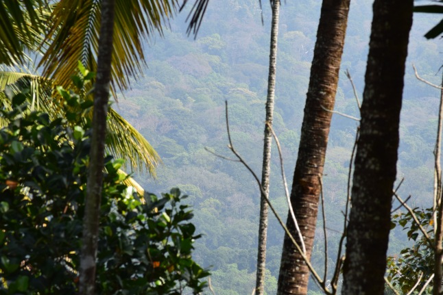 Kerala-Munnar