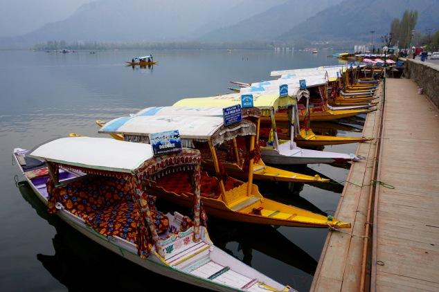 shikara-dal-lake-kashmir