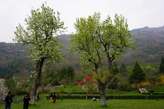 srinagar-dal-lake-kashmir