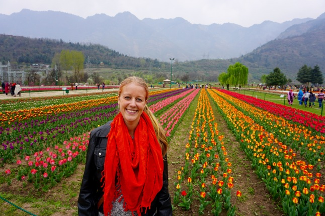 tulips-srinagar-kashmir-india-me