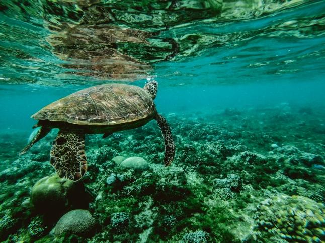 snorkelen australie bucket list bestemmingen