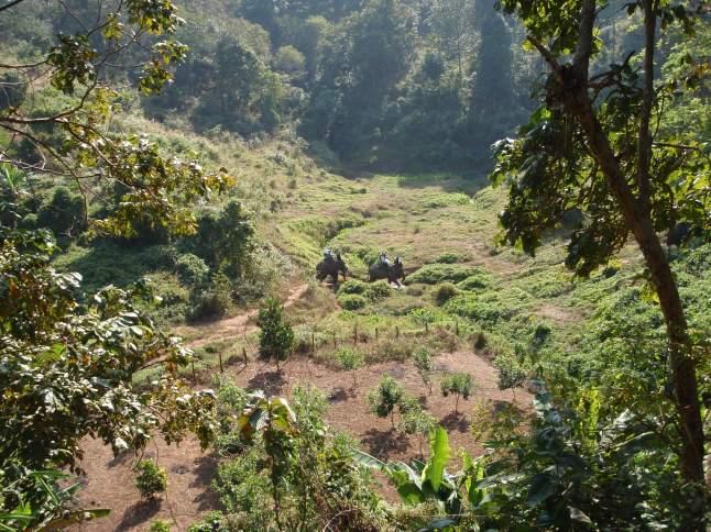 olifantenrit thailand elephant ride